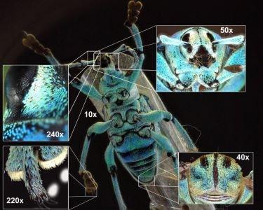 Dino-Lite mikroskop insekter