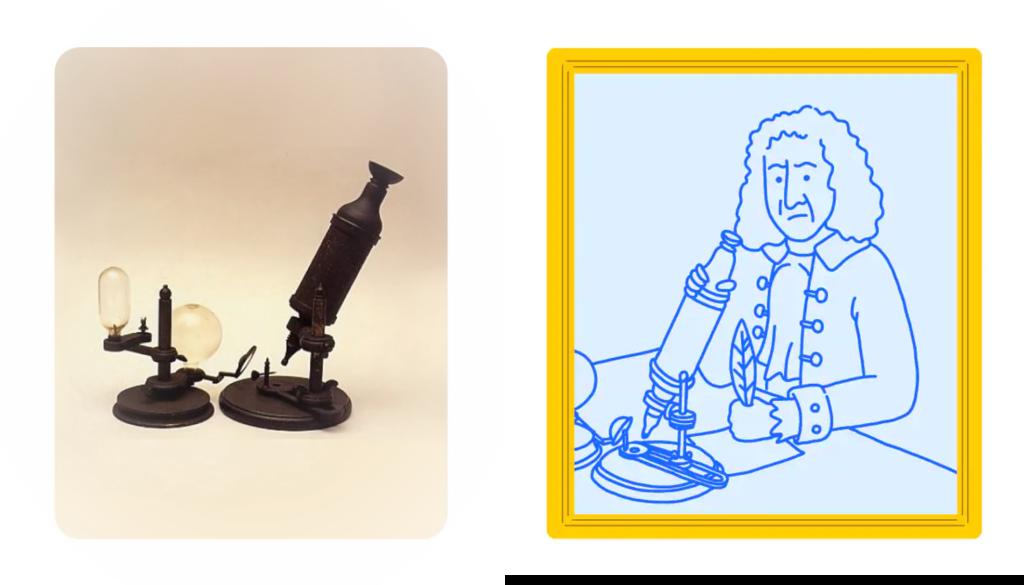 Hooke opfinder af mikroskoper til forstørrelse